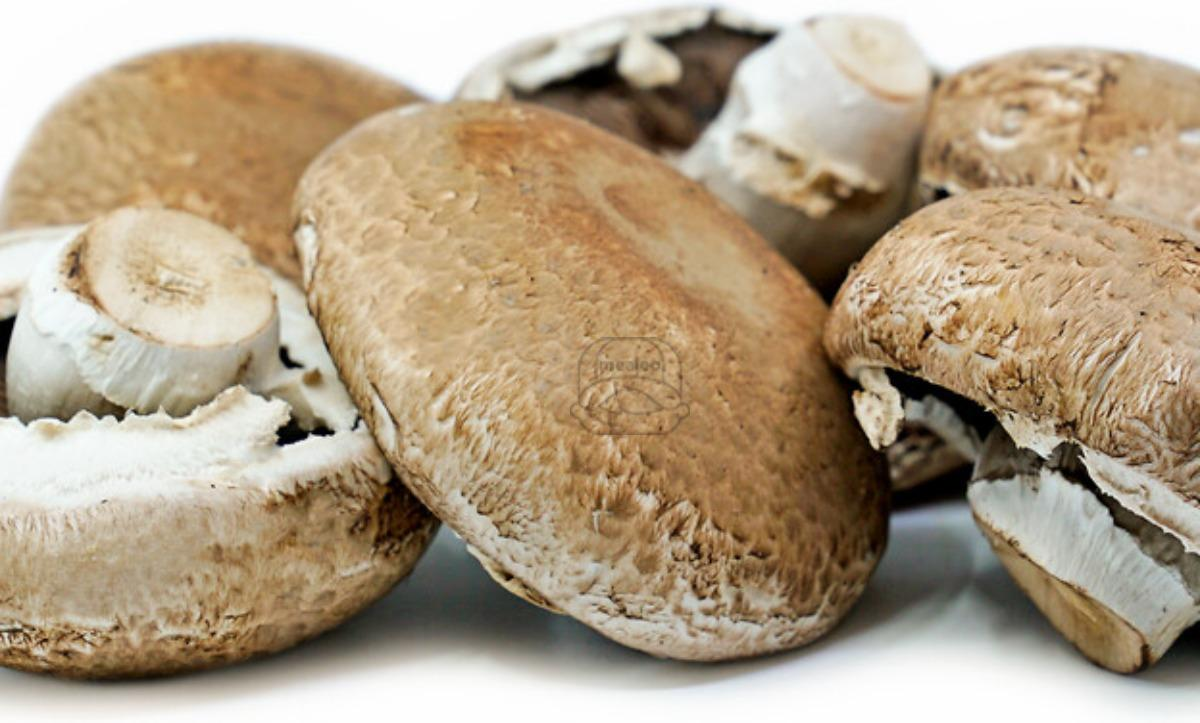 Mushroom Portabella