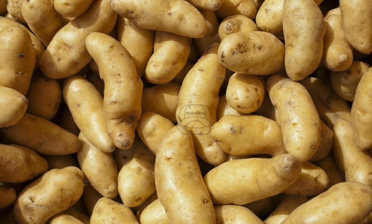Potato Fingerling