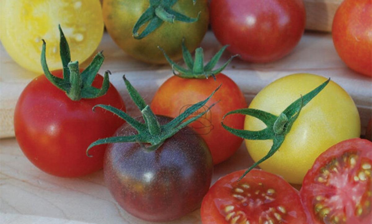 Tomato Heirloom Cherry